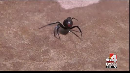 Common Places for Spiders to Nest Around Your Home_-7208989293230535889