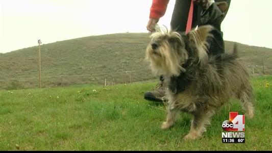 Park City Authorities crack down on dog leash laws_1478679948220713424