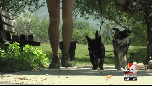 Debate Continues Over Possible Six Off-Leash Dog Parks_-6904872673529476073