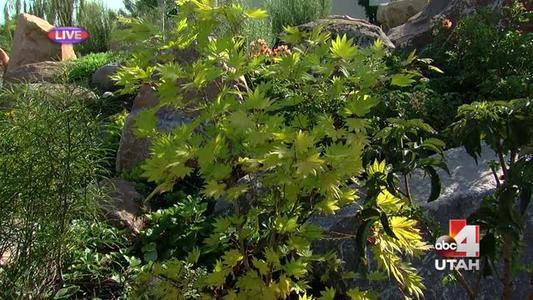 Millcreek Gardens_3945888603651329897