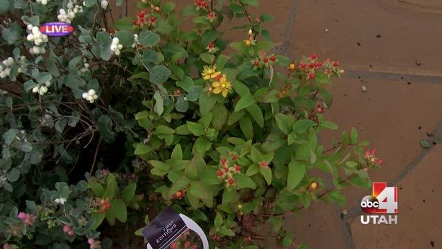 Millcreek Fall planting_20150917154504