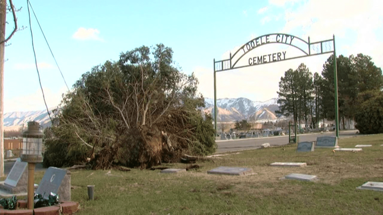 trees down Tooele cemetery