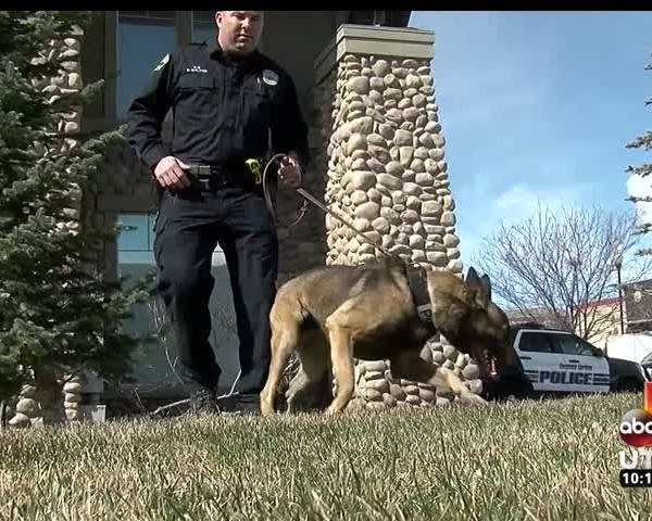 How Do K9 Drug Detection Dogs Help Fight Crime-_43835066-159532