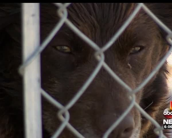 Inmates To Staff Proposed Animal Shelter in Southern Utah_38362949-159532