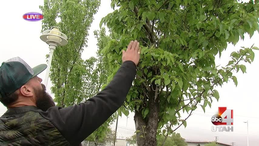 Taking care of your trees_20160426155006