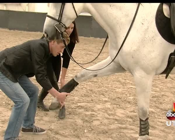 Behind the scenes with the horses from cavalia_20160511155509