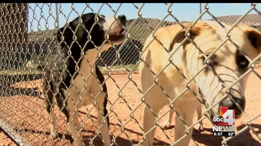 Dog Ordinance Controversy In Cedar City_56948707-159532