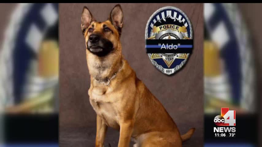 Remembering -Aldo-- a Champion K9 with UPD_39547252-159532