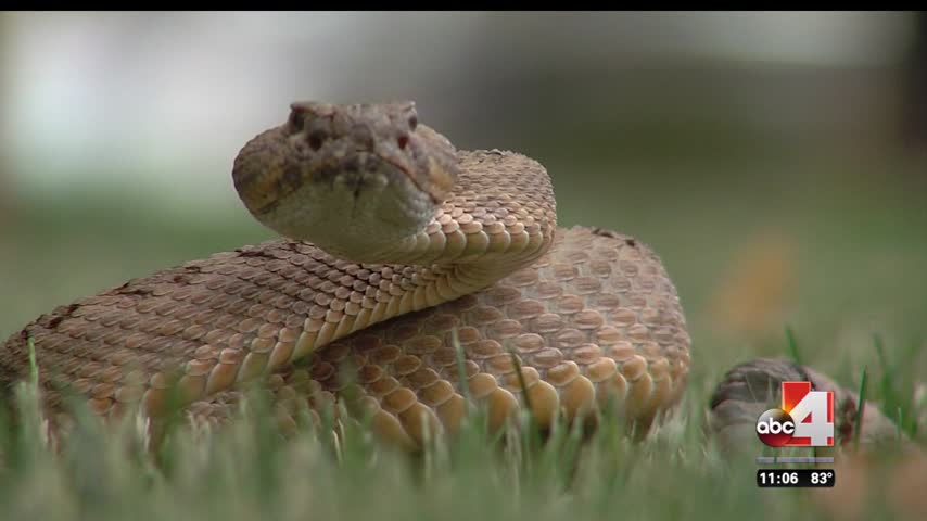 Watch out for rattlesnakes_17571774-159532