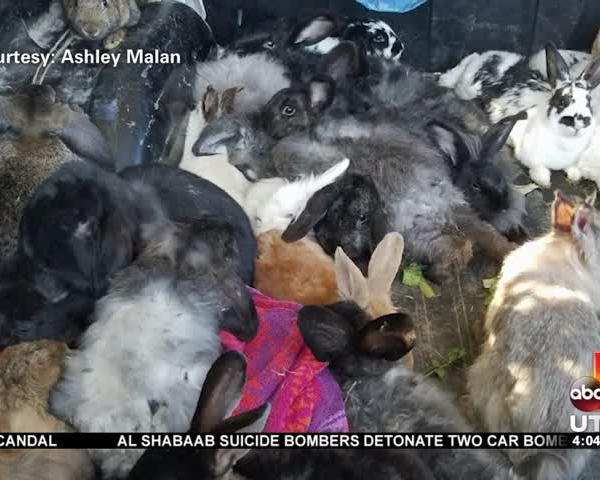 100- rabbits dumped on dirt road_20160726230502