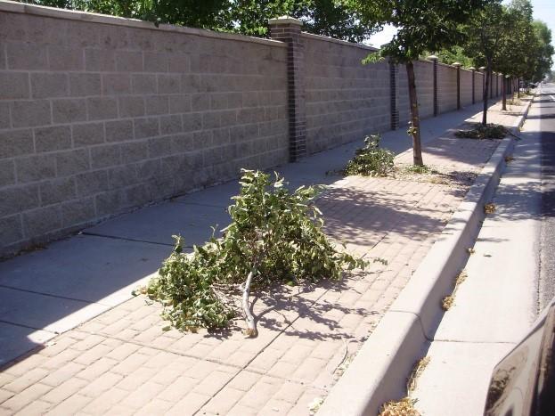 West Jordan Tree Vandalism 1_1472074523074.jpg