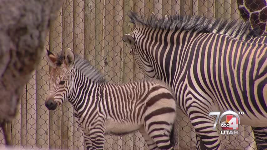 Hogle Zoo Animals
