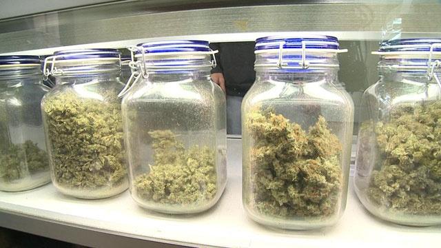 Medical marijuana_2369675403922114-159532