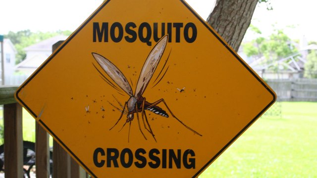 New species of mosquito discovered in Moab