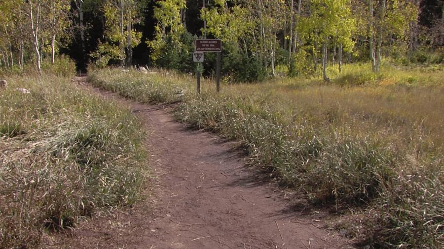 millcreek_canyon_trail.png