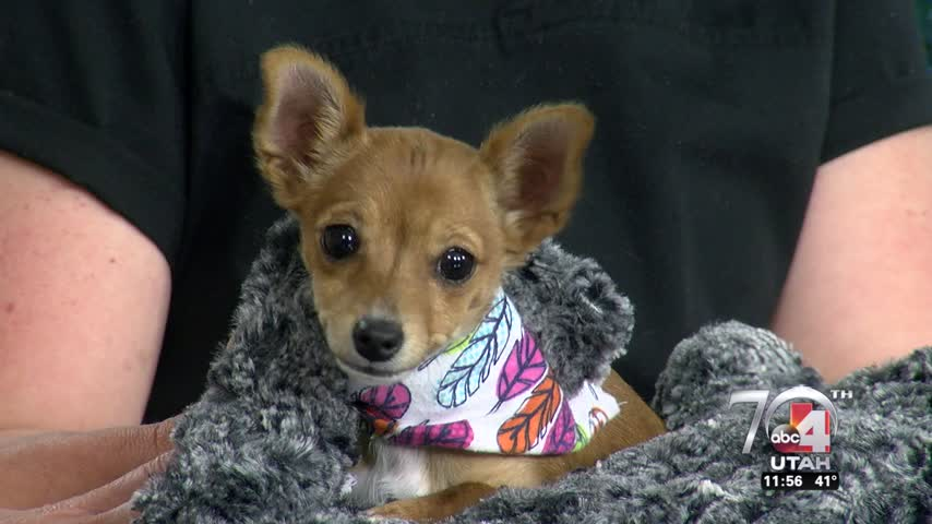 Ginger pet of the week_21698671