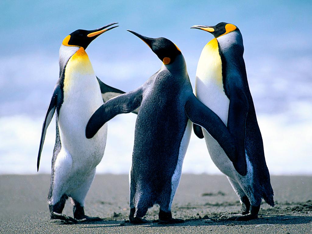 Penguins_1512426806951.jpg