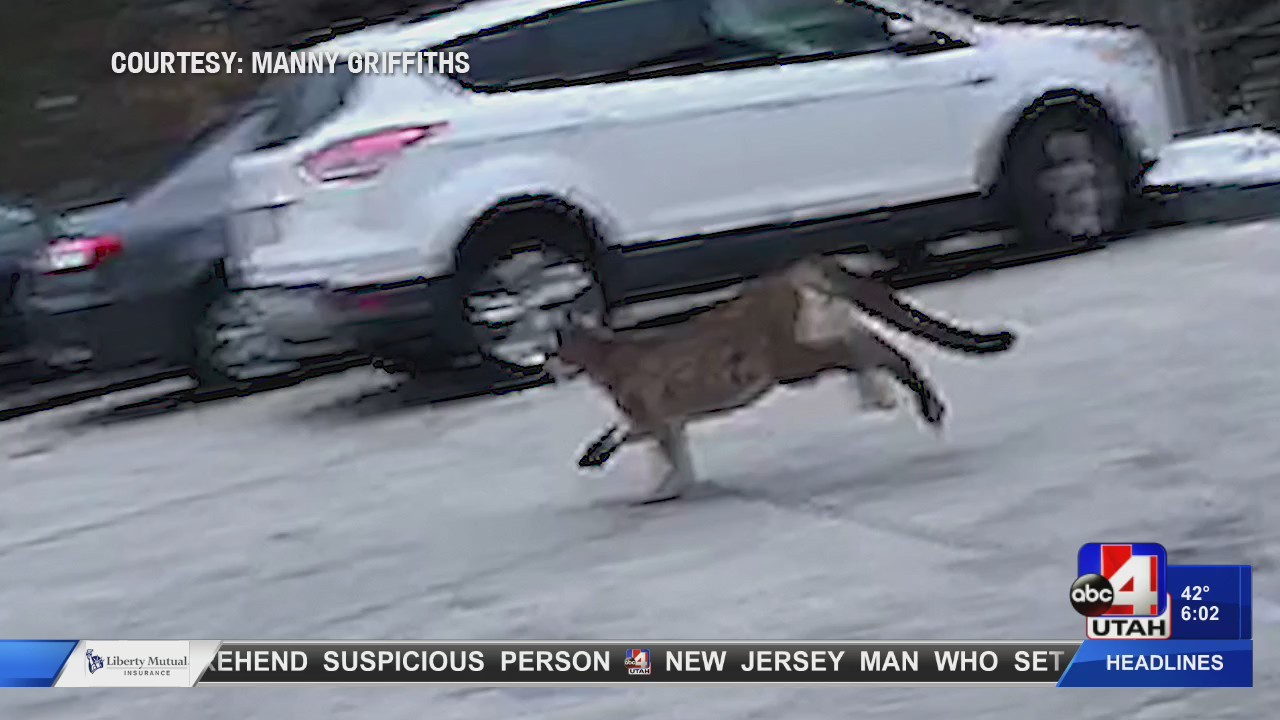 Man_captures_video_of_cougar_in_Provo_ne_0_20180214011316