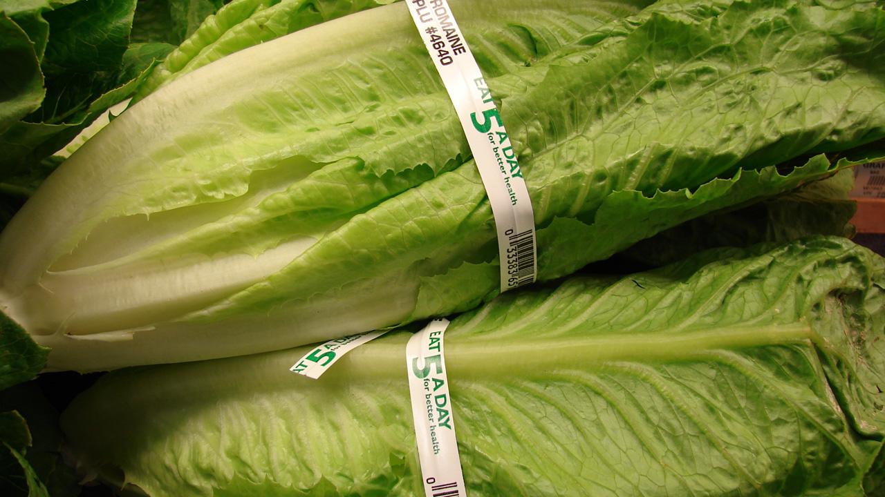 romaine_lettuce.png.jpg