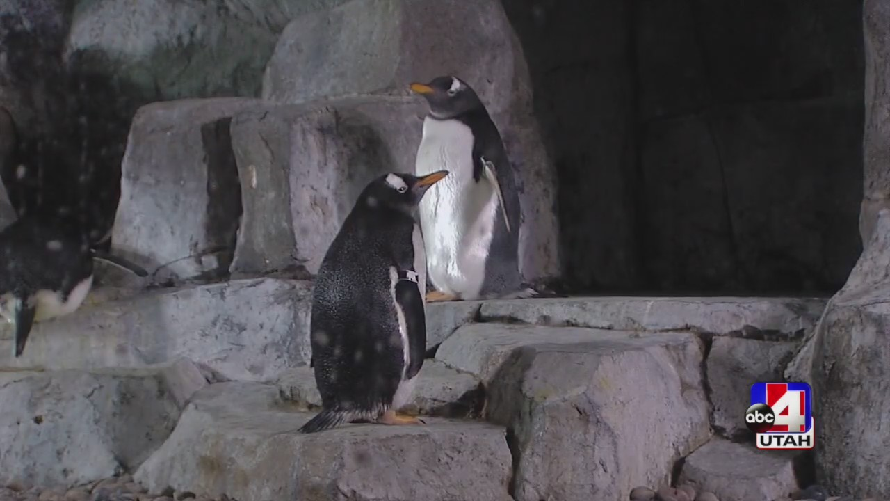 Aquarium Penguin Week