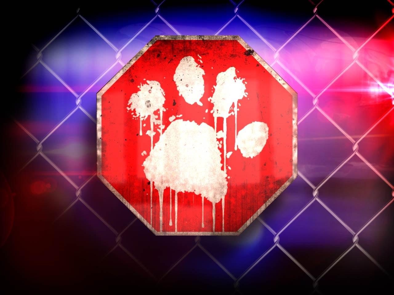 animal abuse graphic
