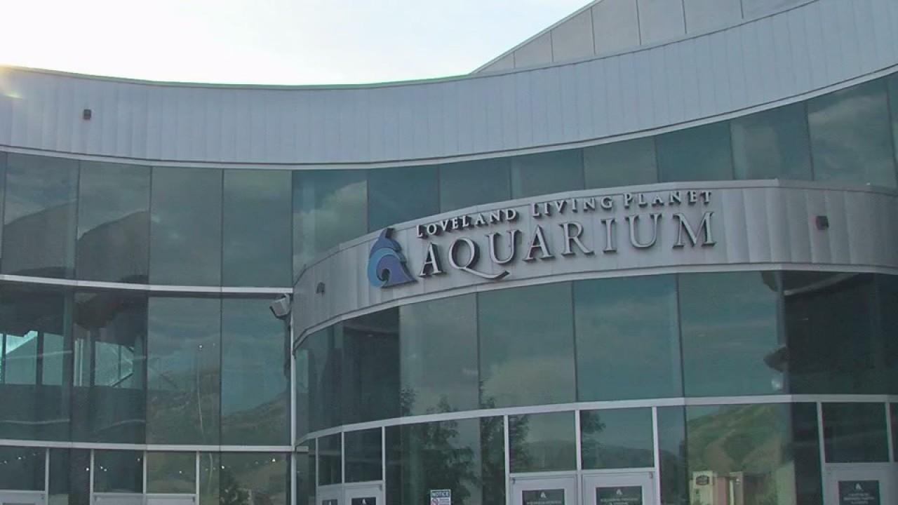 Case_of_gun_found_at_Draper_aquarium_to__0_20180712060802