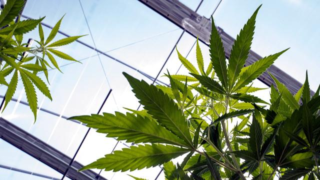 The_latest_on_Utah_s_medical_cannabis_ba_0_20180720053116