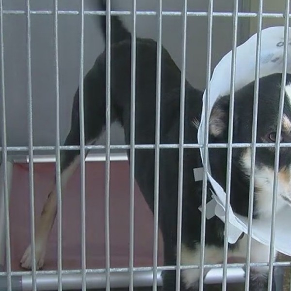 Logan City finds temporary solution to animal shelter situation