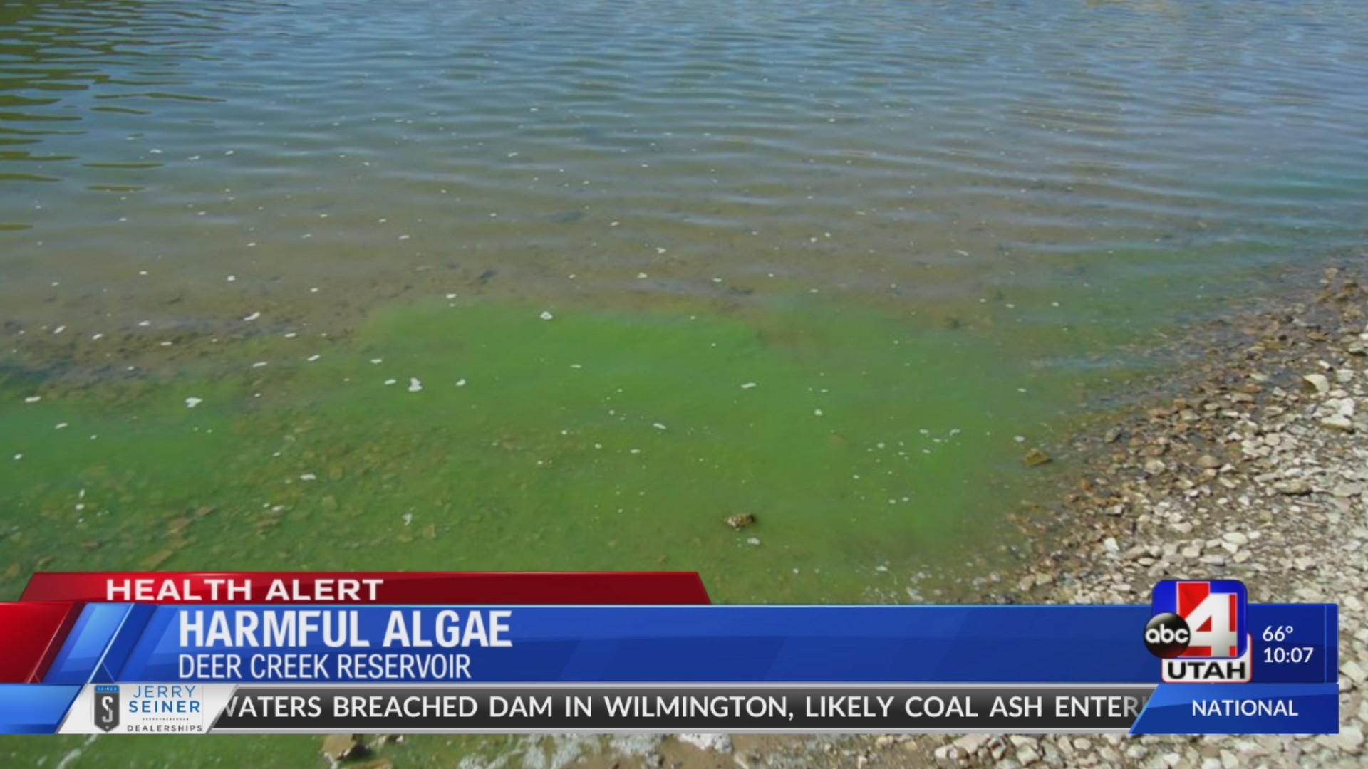 Harrmful_algae_detected_at_Deer_Creek_Re_0_20180922051207