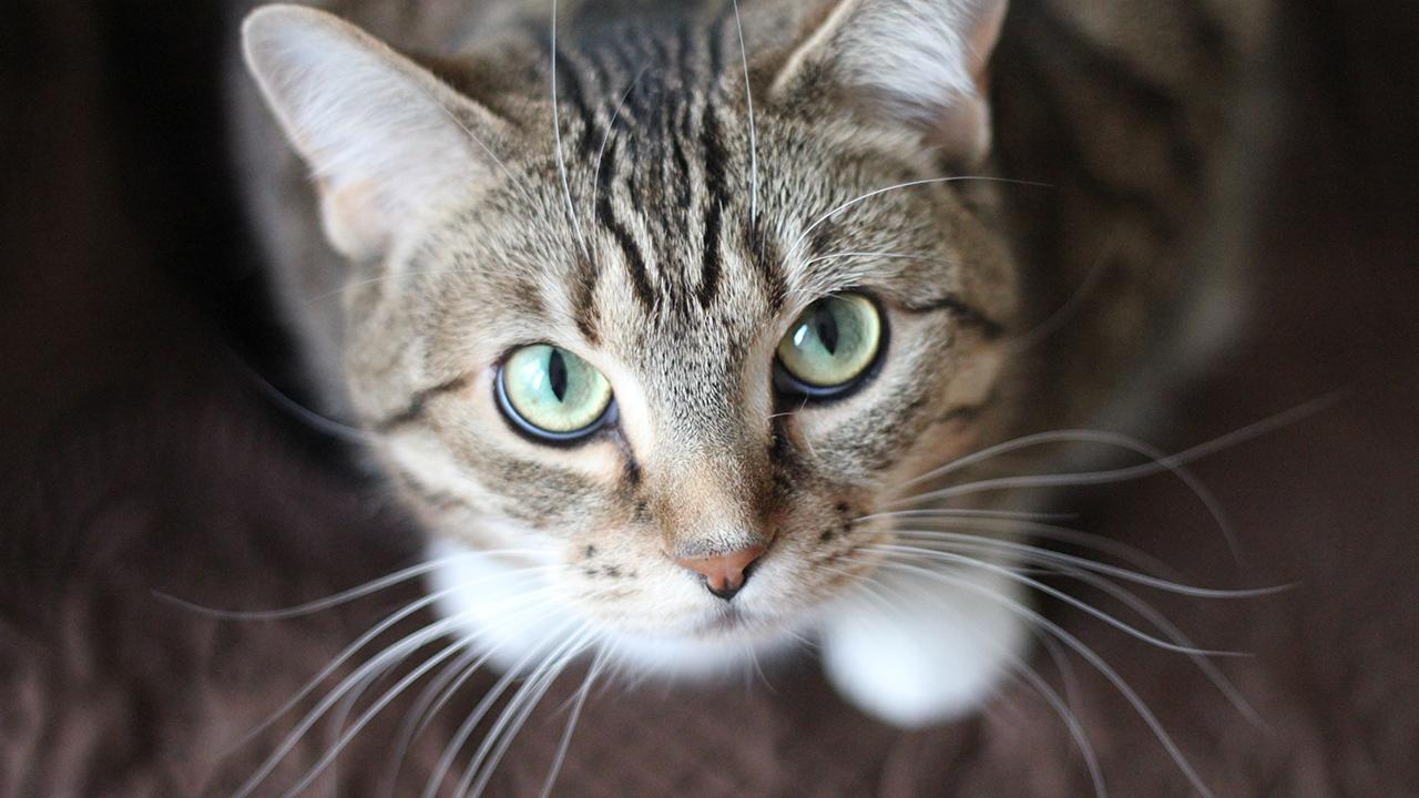 cat-kitten-animal-pet_1518473820917_342027_ver1_20180214055401-159532