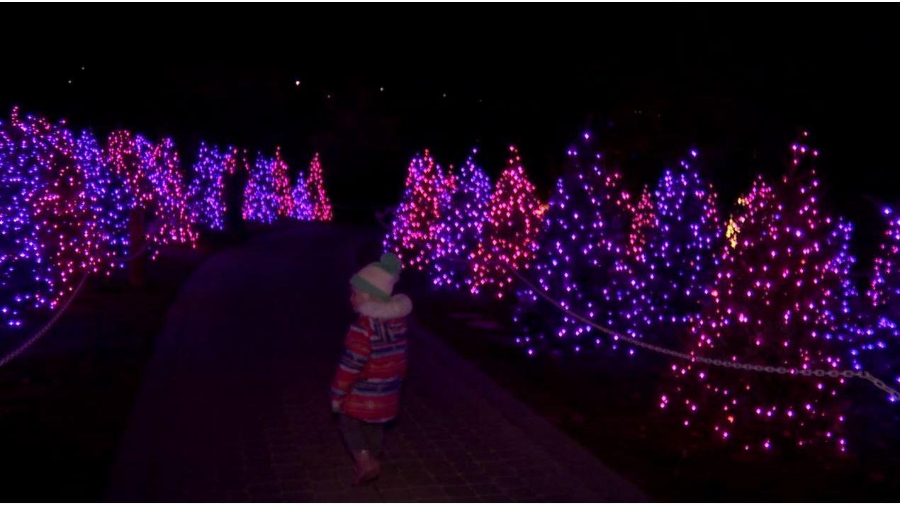 Luminaria_shines_at_Thanksgiving_Point_0_20181128030032