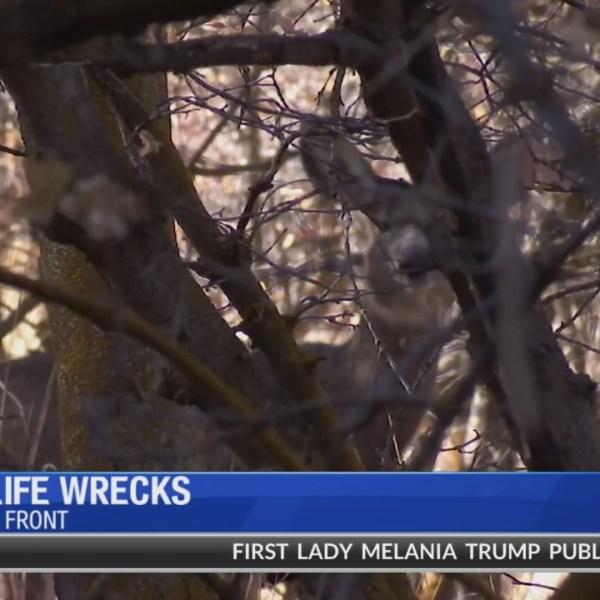 Utah hot spots for vehicle versus wildlife crashes