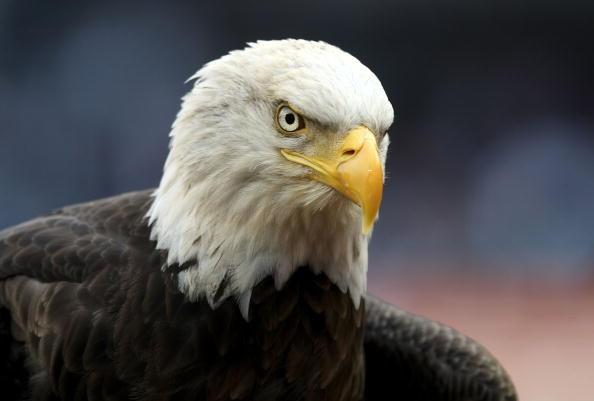 OTD June 28 - bald eagle_2073993635262664-159532