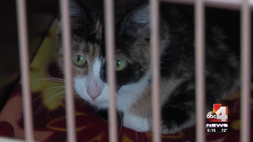 Animal cruelty allegations against Utah Co- Animal Shelter_74262960-159532