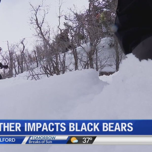 Black_Bears_Impacted_by_Weather_0_20190314002854
