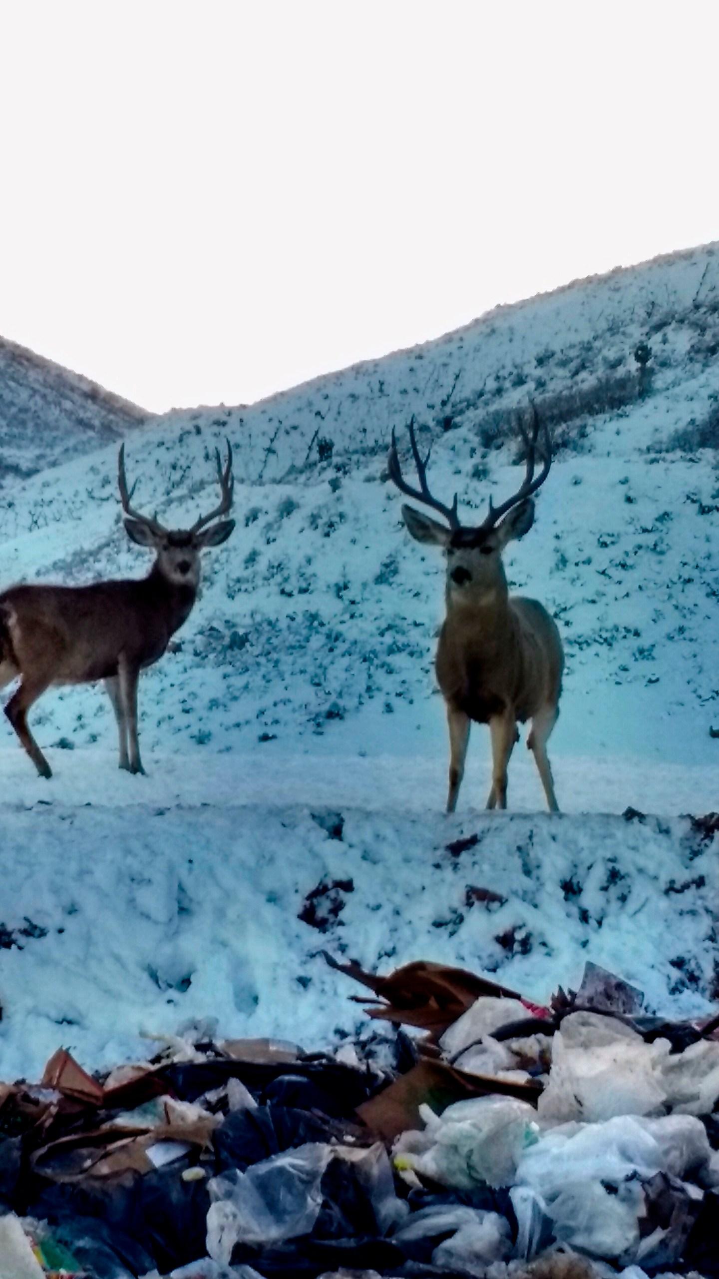 Dead Deer Trash_1558750593544