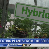 Bad timing: springtime freeze threatens new gardens