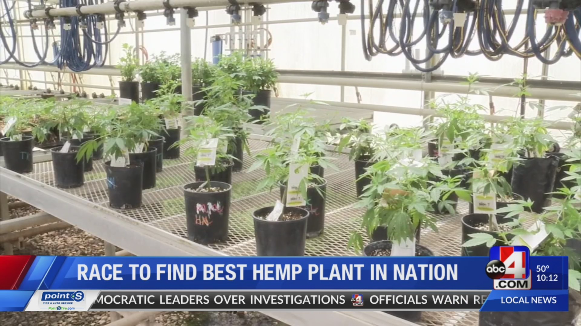 Dr Hemp research: Race to find the best hemp plant in the nation