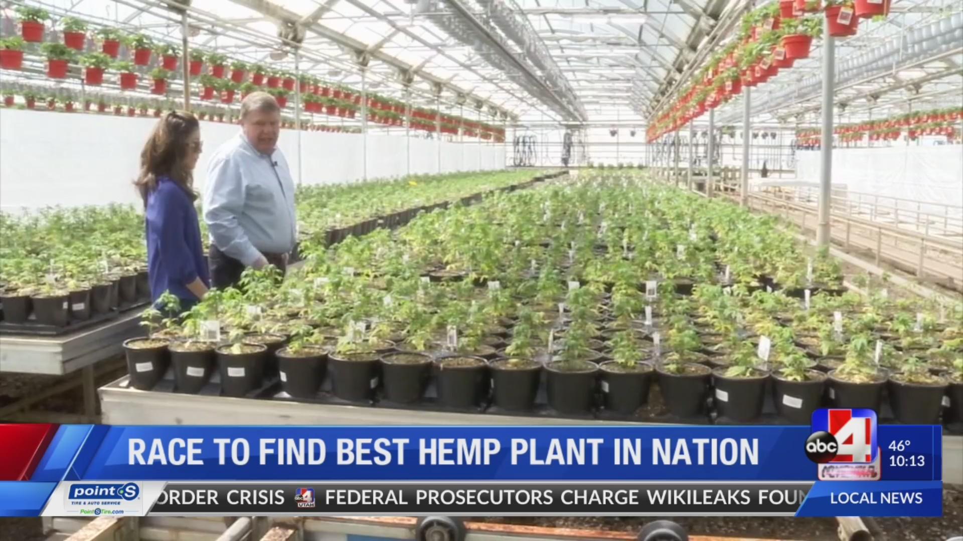 Exclusive look at researching and growing hemp in Utah