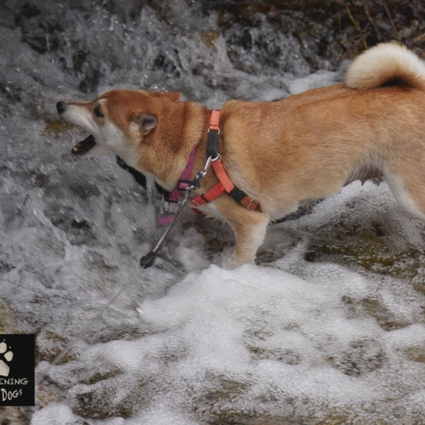 Fun hikes and activities with Fido