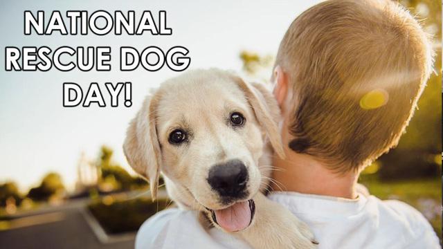 National rescue dog day_1558348491454.jpg_88298183_ver1.0_640_360_1558373471928.jpg.jpg