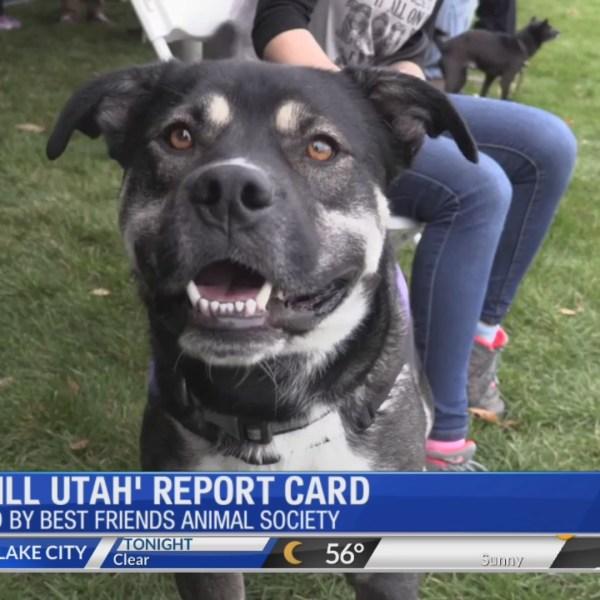 'No-Kill Utah' Initiative Report Card Released