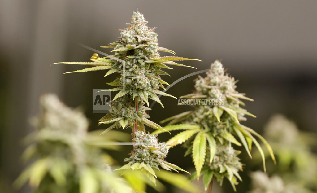 Medical Marijuana Utah_1558910756386
