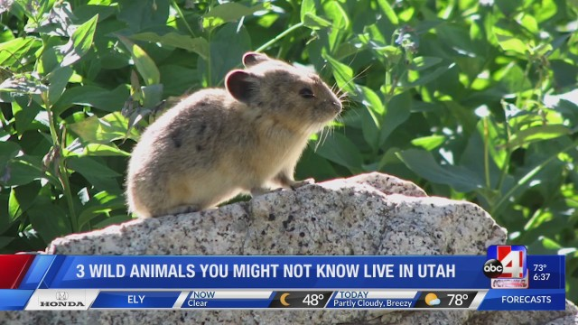 Three wild animals you might not know live in Utah