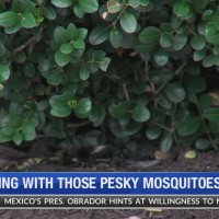 Dealing_with_those_pesky_mosquitoes_0_20190604133607