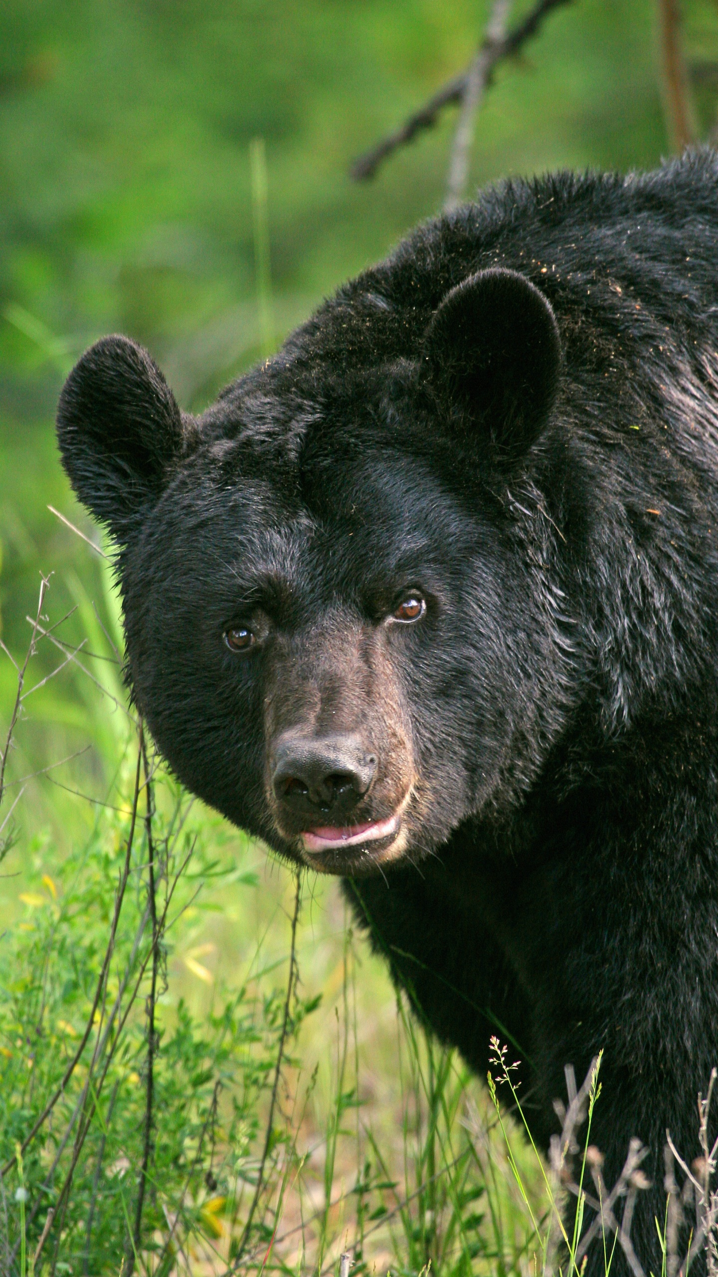 Bear safety tips_1559679915798