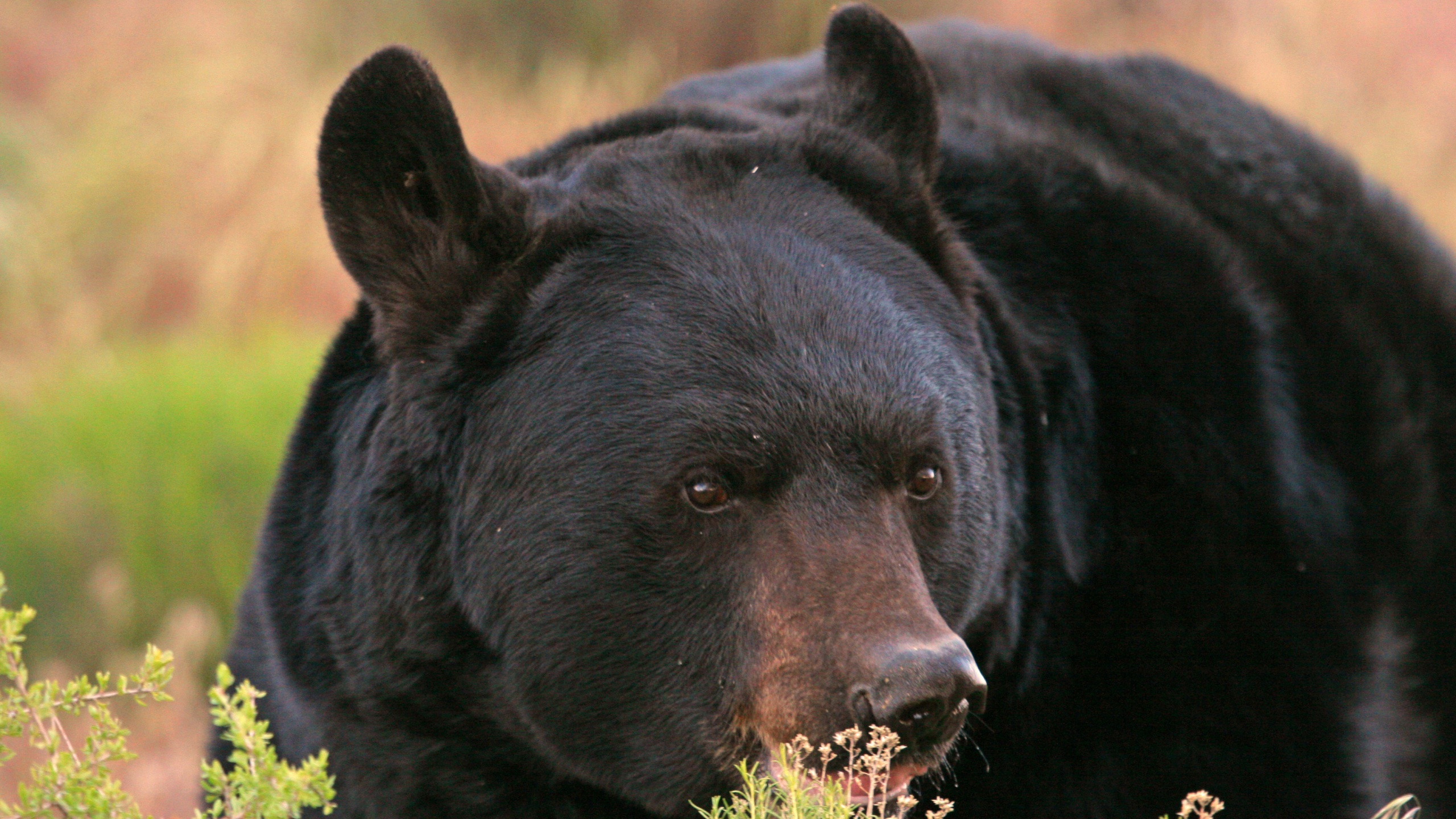 Bear safety tips_1559679923298