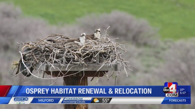 New osprey nesting platforms installed near Utah Lake