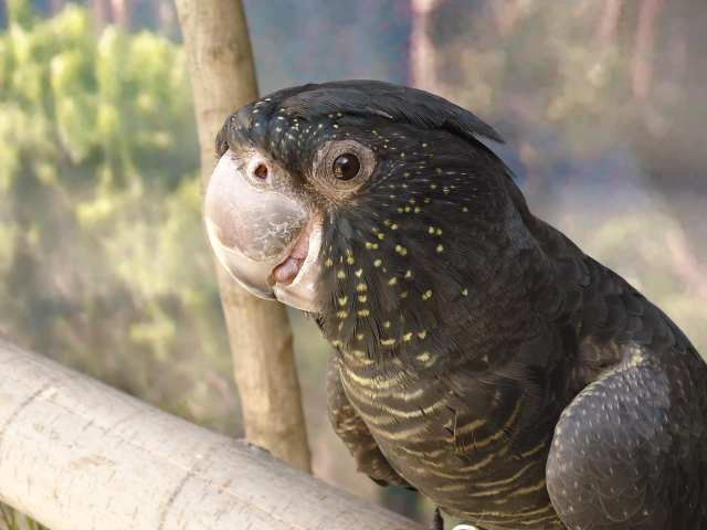 Beloved bird missing from Tracy Aviary