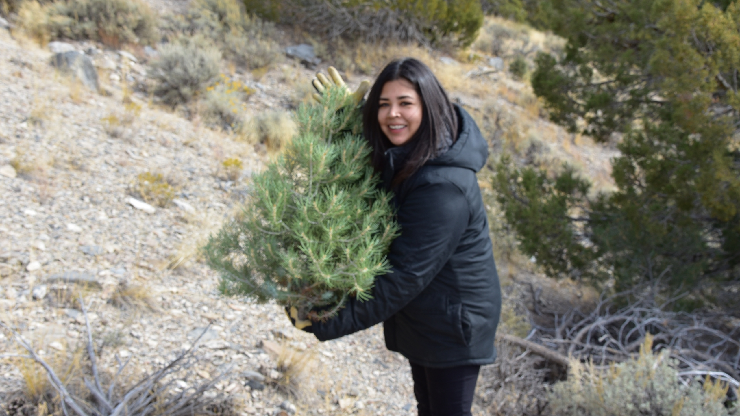 Christmas Help 2020 Utah Where and when Christmas tree permits go on sale in Utah | ABC4 Utah